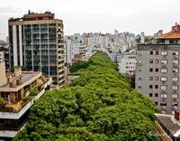 Самая красивая улица в мире, похожая на сказочный лес