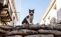 Как будет выглядеть мир без людей: 20 фото давно заброшенных мест по всему свету