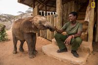 Как живут слоны-сироты в приюте в Кении, и почему так важно их спасать