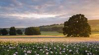 Лучшие пейзажи дивной Великобритании 2017 года