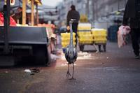 Фотограф выслеживает на улицах городов диких животных и делает потрясающие снимки