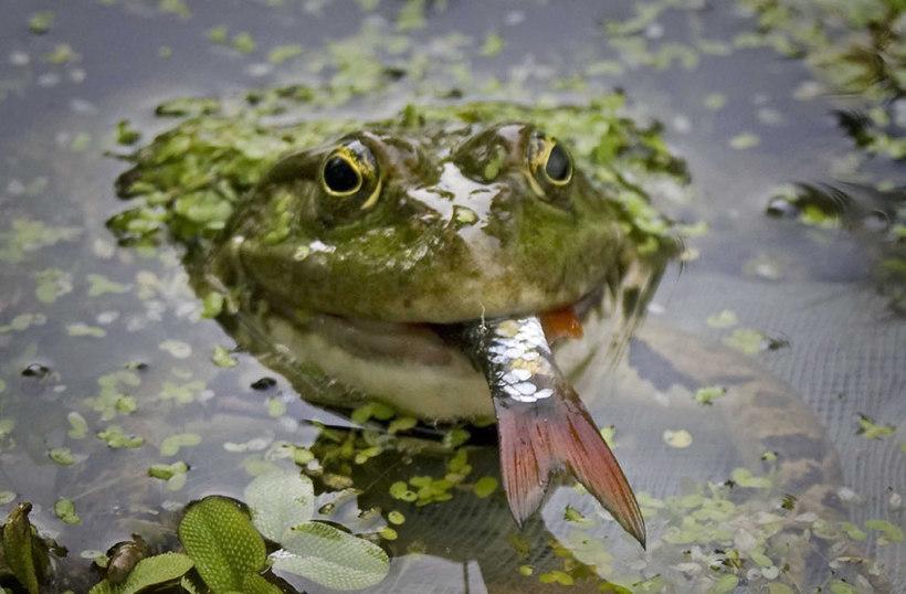можно ли ловить лягушек