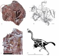 В Китае нашли останки динозавра, похожего на помесь индейки со страусом