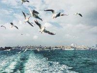 20 крутых фото, победивших в конкурсе фотографий, сделанных на телефон
