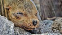 12 умилительных снимков морских львов, живущих на Галапагосских островах
