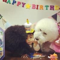 Маленькая японка и ее гигантский пудель прославились на весь мир своей дружбой