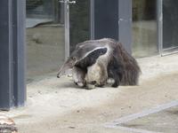Добро пожаловать в венский зоопарк!