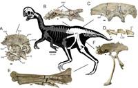 Маленькие динозаврики спали, прижавшись друг к другу