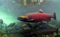 Пять малоизвестных фактов о рыбах