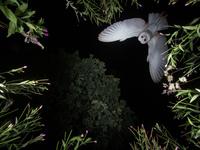 10 самых крутых снимков с конкурса лучших фотографий птиц 2017 года