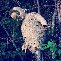 10 дьявольски жутких фото о том, на что способна дикая природа