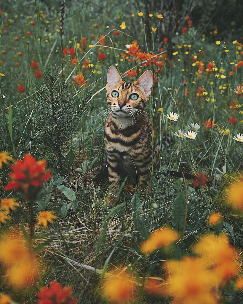 Потрясающая путешествующая кошка Сьюки, которая живет лучше, чем мы с вами
