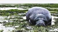 «Ирма» заставила исчезнуть океан с берегов Флориды и Багамских островов