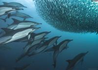 Зачем дельфины помогают людям ловить рыбу?