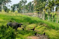 Индонезия — рай на земле