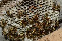 Чем меньше, тем лучше: величина мозга насекомых зависит от размера сообщества