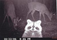 10 кадров со скрытых камер о том, чем занимаются дикие животные, когда никто не видит