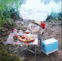 Фото крошечного ежика-путешественника — лучшее, что можно сегодня увидеть
