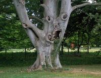 20 фантастических деревьев, которые выглядят совсем не как деревья