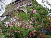 Эйфелева башня в цветах сакуры