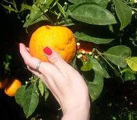 Сезонные фрукты на Кипре в марте
