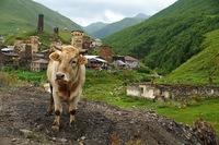 Прекрасное далеко: высокогорное село Ушгули