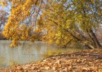 Середина ноября в Краснодаре