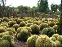 Кактусовая плантация в парке