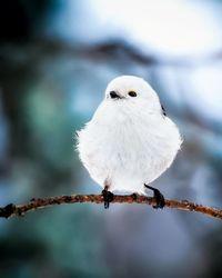 Финский фотограф снимает настоящих живых Angry Birds
