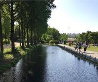 Seoul Forest в мае