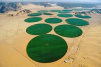 Рай среди пустыни: как превратить безжизненные пески в цветущие поля