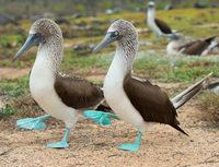 10 самых необычных птиц нашей планеты