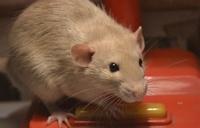 Новая лапа, хвост и даже голова: какие животные способны регенерировать части тела