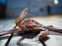 Чудеса и ужасы Берингова моря: рыбак показал, как морепродукты попадают к нам на стол