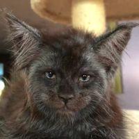 Люди не могут поверить в реальность кошки с человеческим лицом, а она живет в России