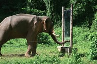 14 небанальных фактов о животных, которые не встретить в энциклопедиях