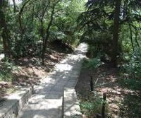 Кое-где Массандровский парк напоминает лесопарк