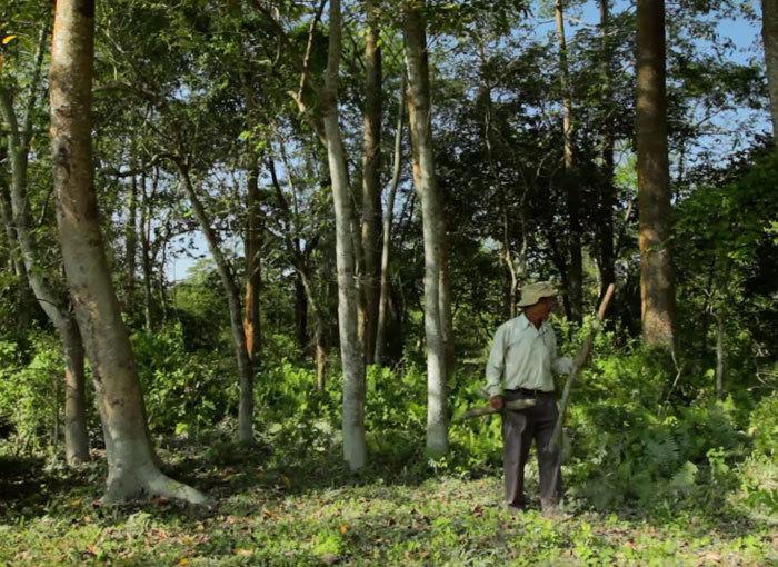 40 лет каждый день мужчина сажает на острове деревья, спасая его от исчезновения  Planting-trees-40-years-desolate-majuli-island-jadav-payeng-india-5b6aa1ee90898__700