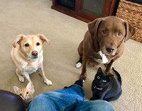 26 смешных фотографий о том, как собаки умеют выпрашивать еду