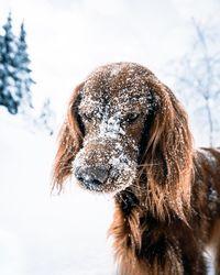Эпические снимки путешествий норвежца и его собаки