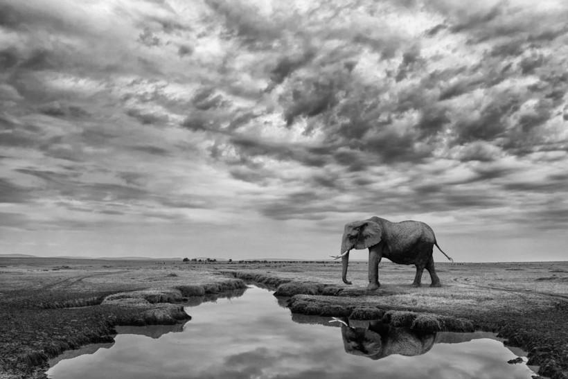 Победители в категории «Монохром» фотоконкурса Siena International Photo Awards 2018