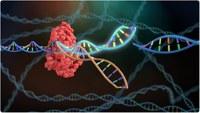 Генетически модифицированные девочки и китайский ученый, который исчез