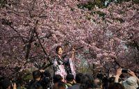 На Шанхайском фестивале персиковых деревьев