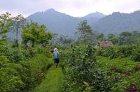 Зеленый сад в центре острова Бали в октябре.