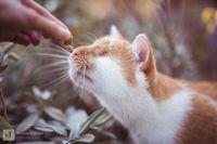 Девушка делает чудесные эмоциональные фото своего кота, у которого нет глаз