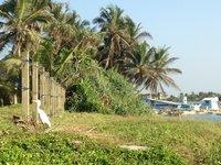 Хиккадува: природа курортного местечка