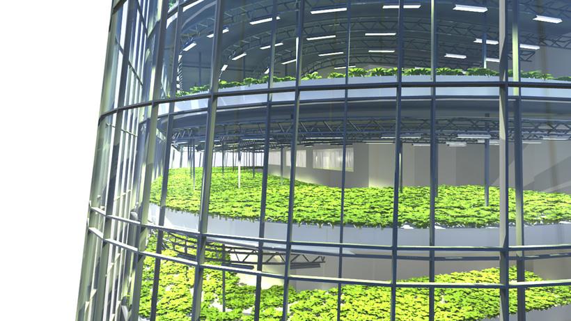 Вертикальные фермы — будущее городских теплиц