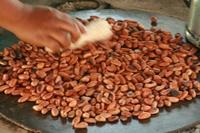 Из чего и как изготовляют шоколад в Белизе?