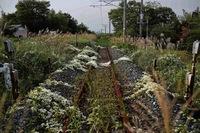 Окрестности АЭС Фукусима-1 спустя несколько лет после трагедии