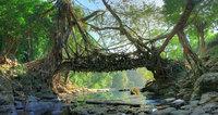 «Живые» мосты в Индии, пойти по которым осмелится не каждый